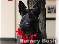 Barney Bush in Christmas Decore